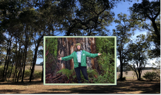 Understorey: Western Australia, our South West Forests & the Rights of Nature