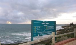 WA Beaches: Keeping People and Sharks Safe This Summer